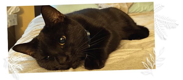 image of an adopted black cat on bed